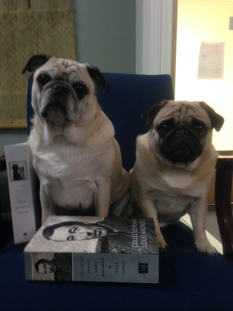 pugs with books 3